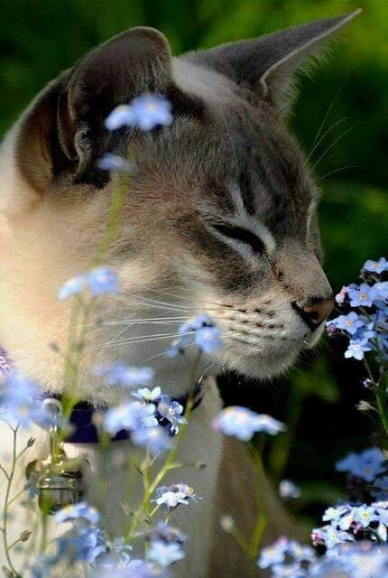 Pin By Linda Lin On Cats Beautiful Cats Beautiful Cats Pictures Cute Cats