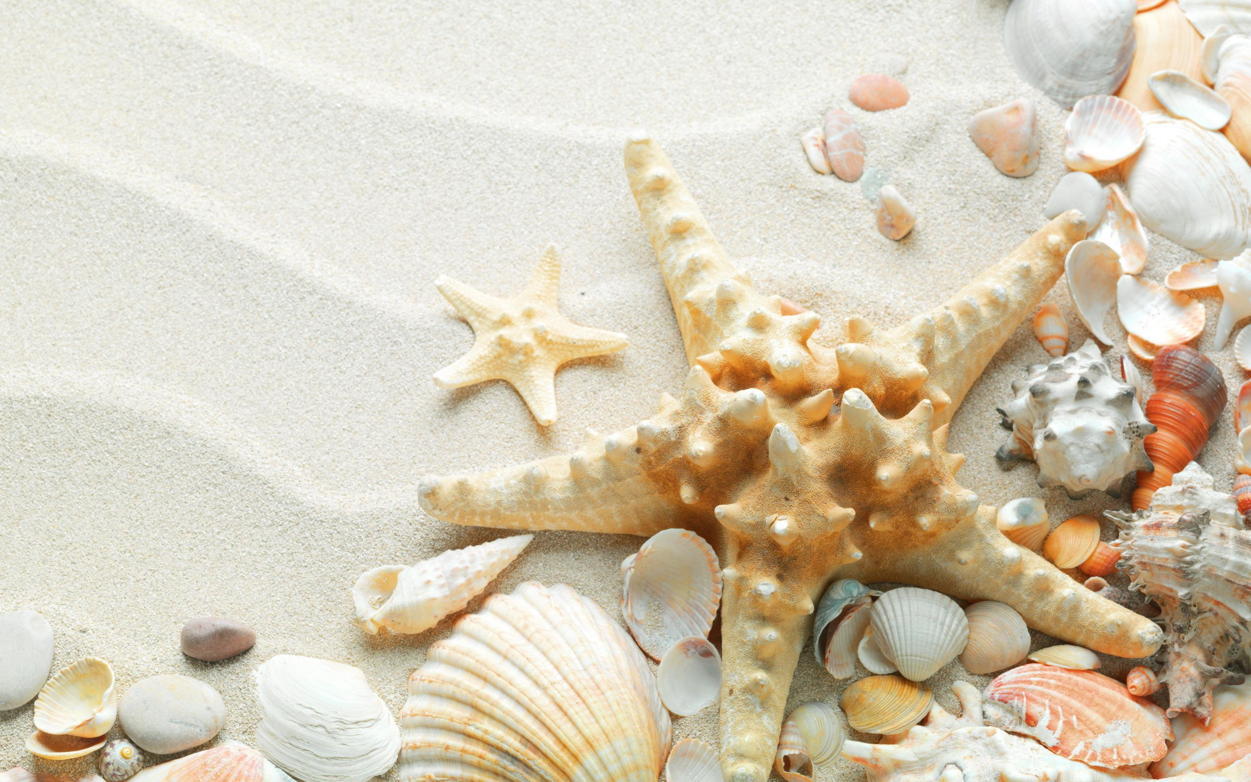 Sea star and shells on white sand Shells