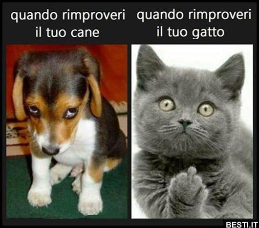 Cani E Gatti Divertenti Cerca Con Google Img Gatti Divertenti