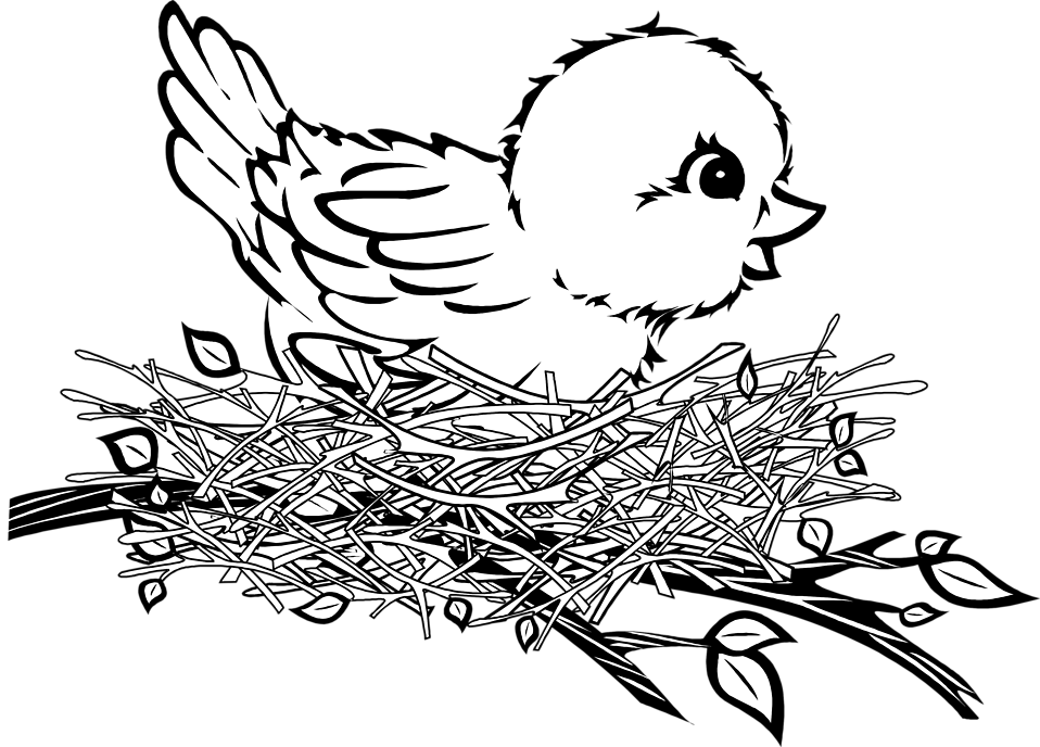 Cartoon Birds Nest Az Coloring Pages Cartoon Birds Coloring Pages Illustration