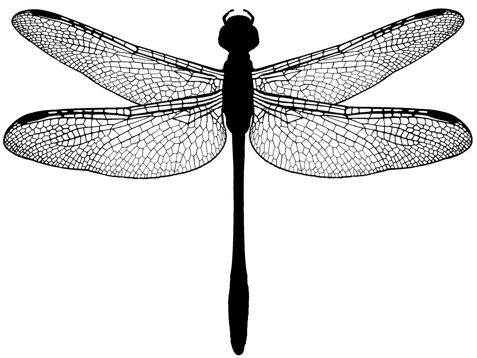 dragonfly - Google Search | dragonflys | Pinterest | Libélulas ...