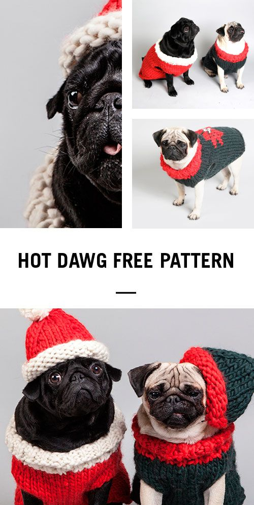 FREE KNITTING PATTERN Keep your best buddy warm with Wool and the ...