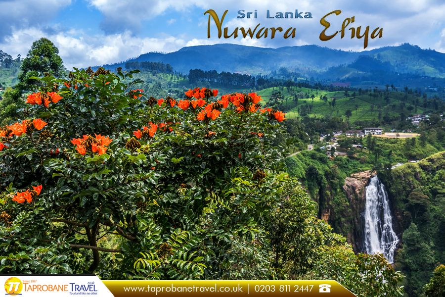 Nuwara Eliya Sri Lanka Nuwara Eliya Is A City In The Hill Country Of The Central Province Sri Lanka Source H Travel Tourism Travel Agent