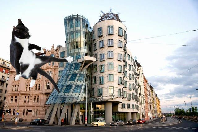 lolcats descend on the worlds most famous architecture you know frank gehrys dancing house in prague - Most Famous Architect In The World