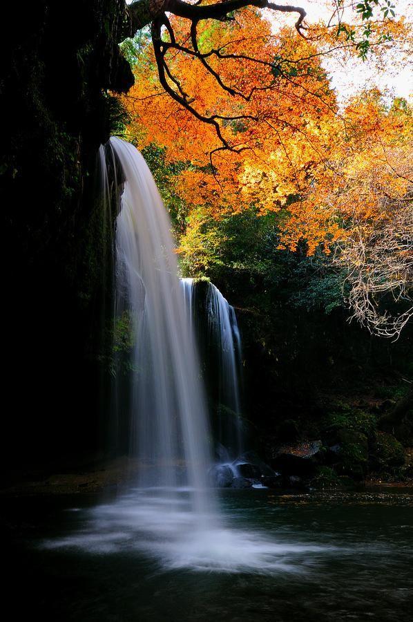 Nature photography by Junya Hasegawa