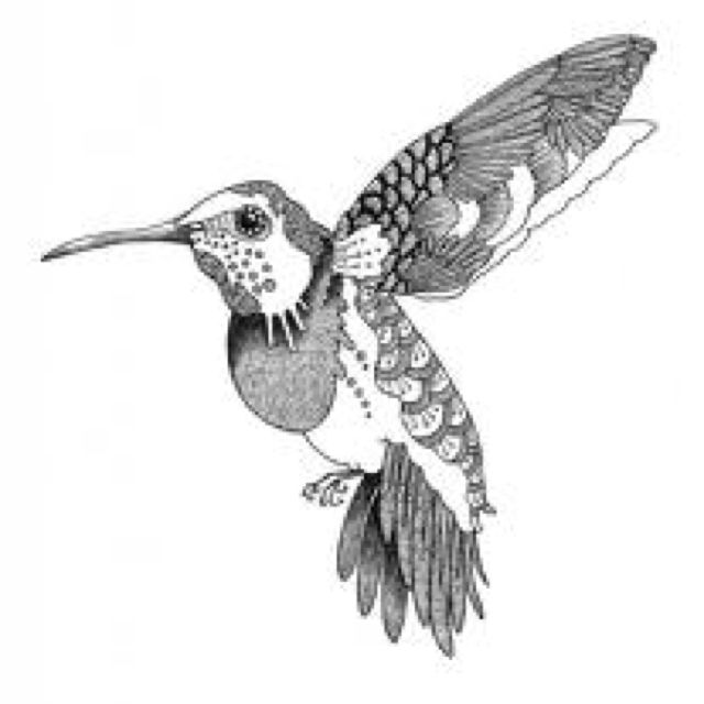 Hummingbird Bird Drawings Pattern Coloring Pages Drawings