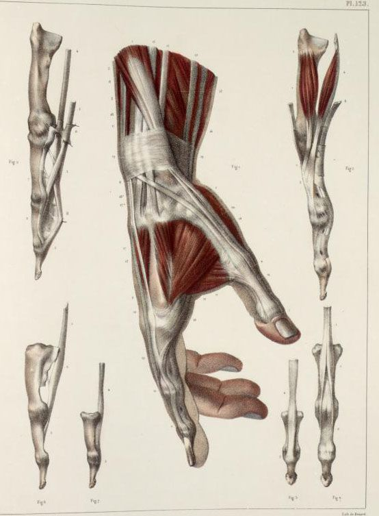 Inspirational Artworks: ANATOMY IMAGES | Anatomy - Arms and Hands ...