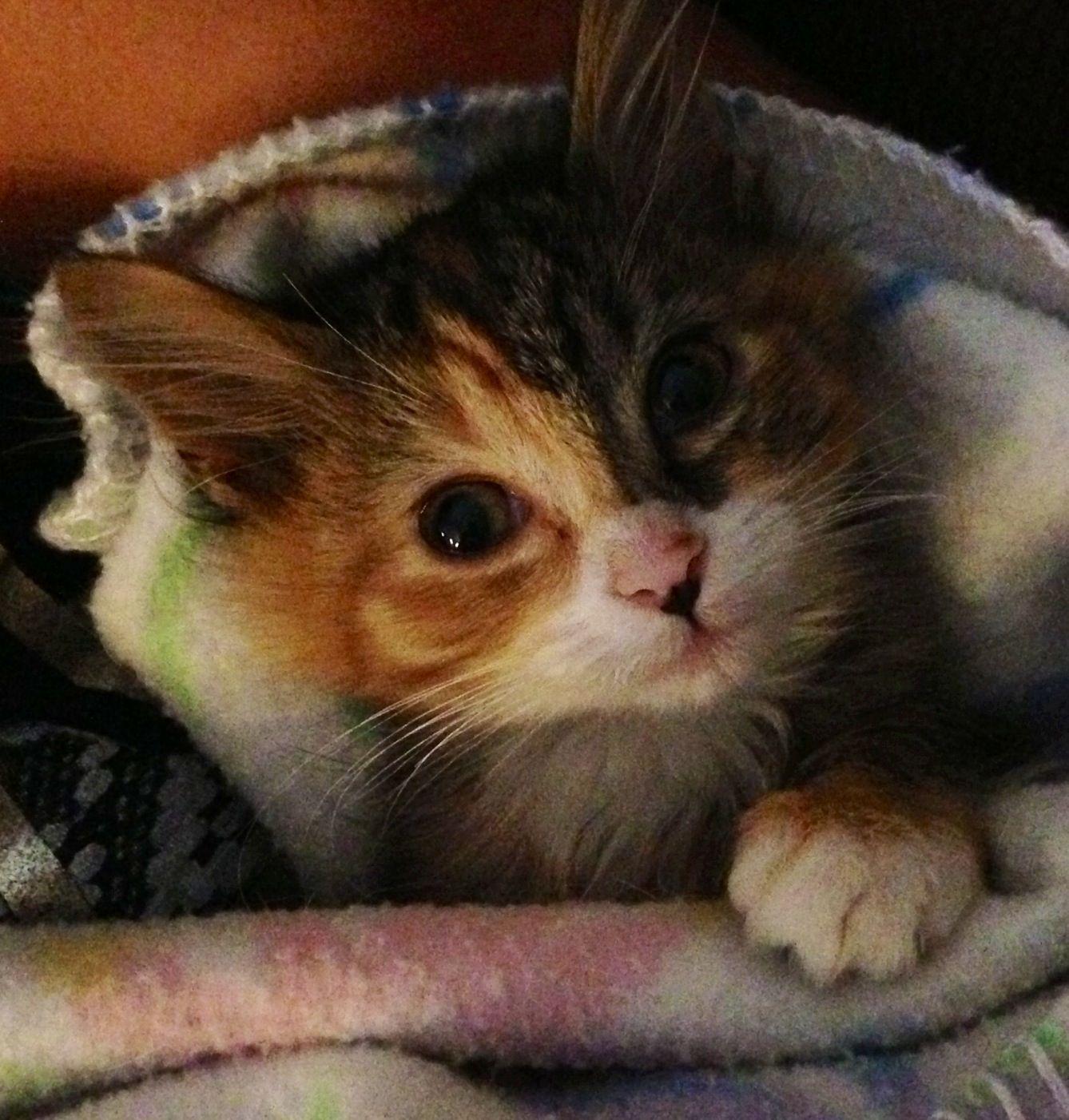 Cute Baby Kitten Kittens Cutest Baby Kittens Cutest Cute Funny Animals