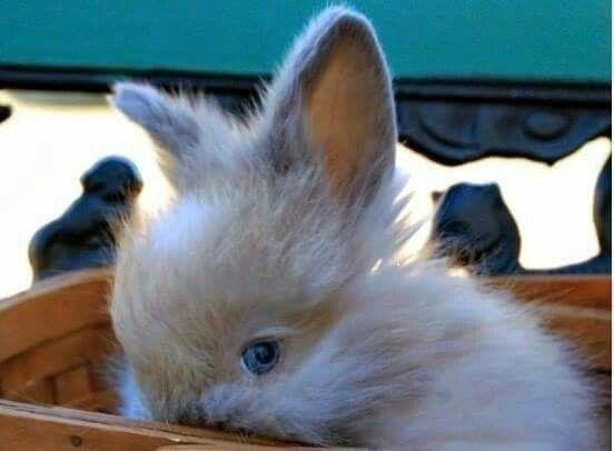 Ashamed Bunny