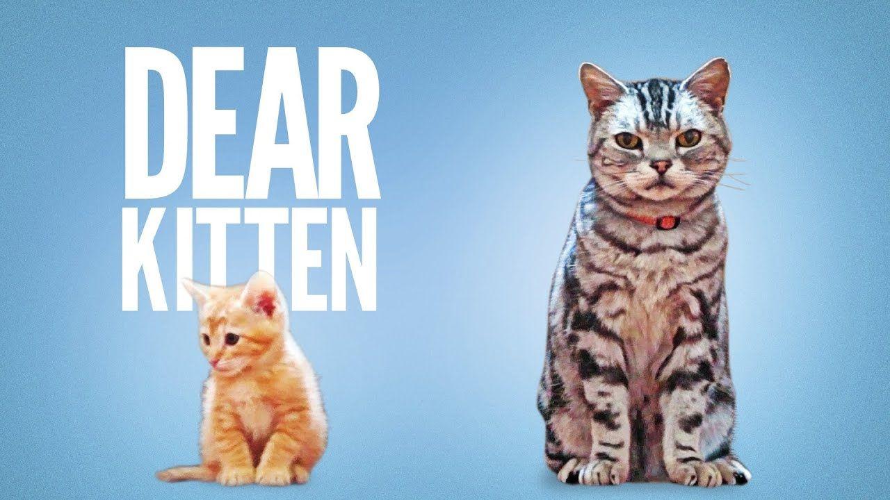 Dear Kittenhttps Youtu Be G4sn91t1v4g Funny Cat Videos Cats Kitten