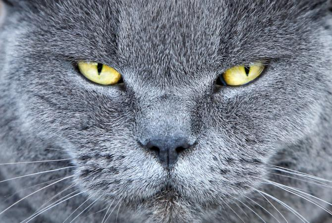 11 Common Male Cat Behaviors in 2020 Cat behavior, Cats