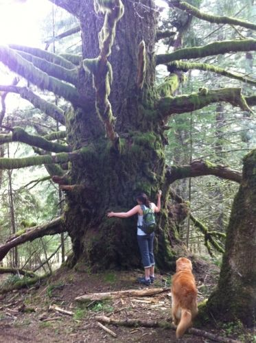 Hiking Guides In Corvallis Oregon Mary S Peak And Mcdonald Forest