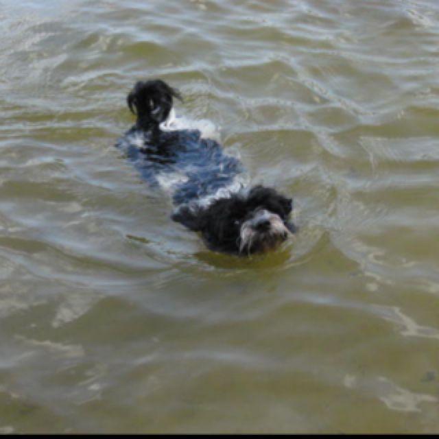 Chino dog paddles