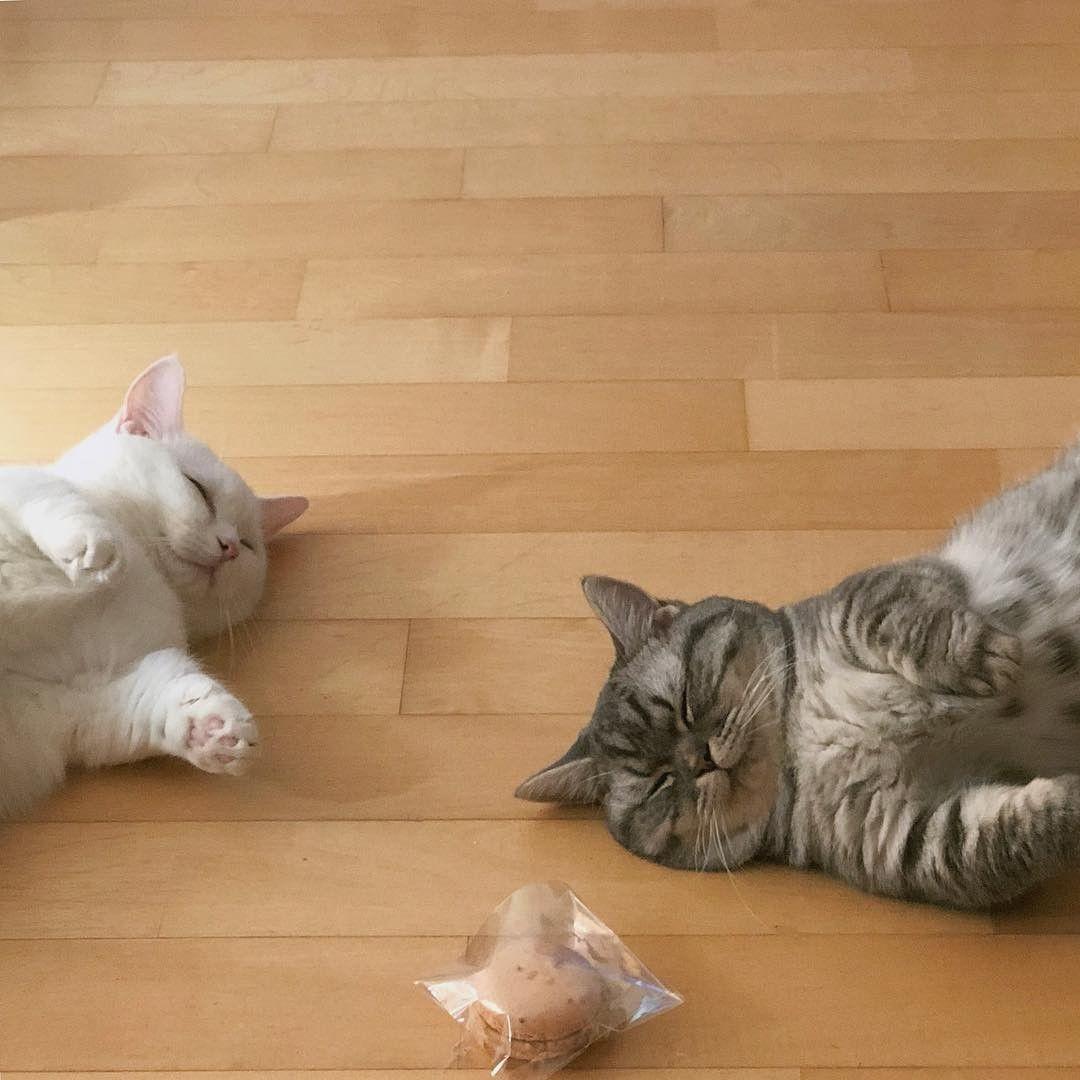 ป กพ นโดย Woon Mapraw ใน ネコ หมาแมว ส ตว เล ยง แมว