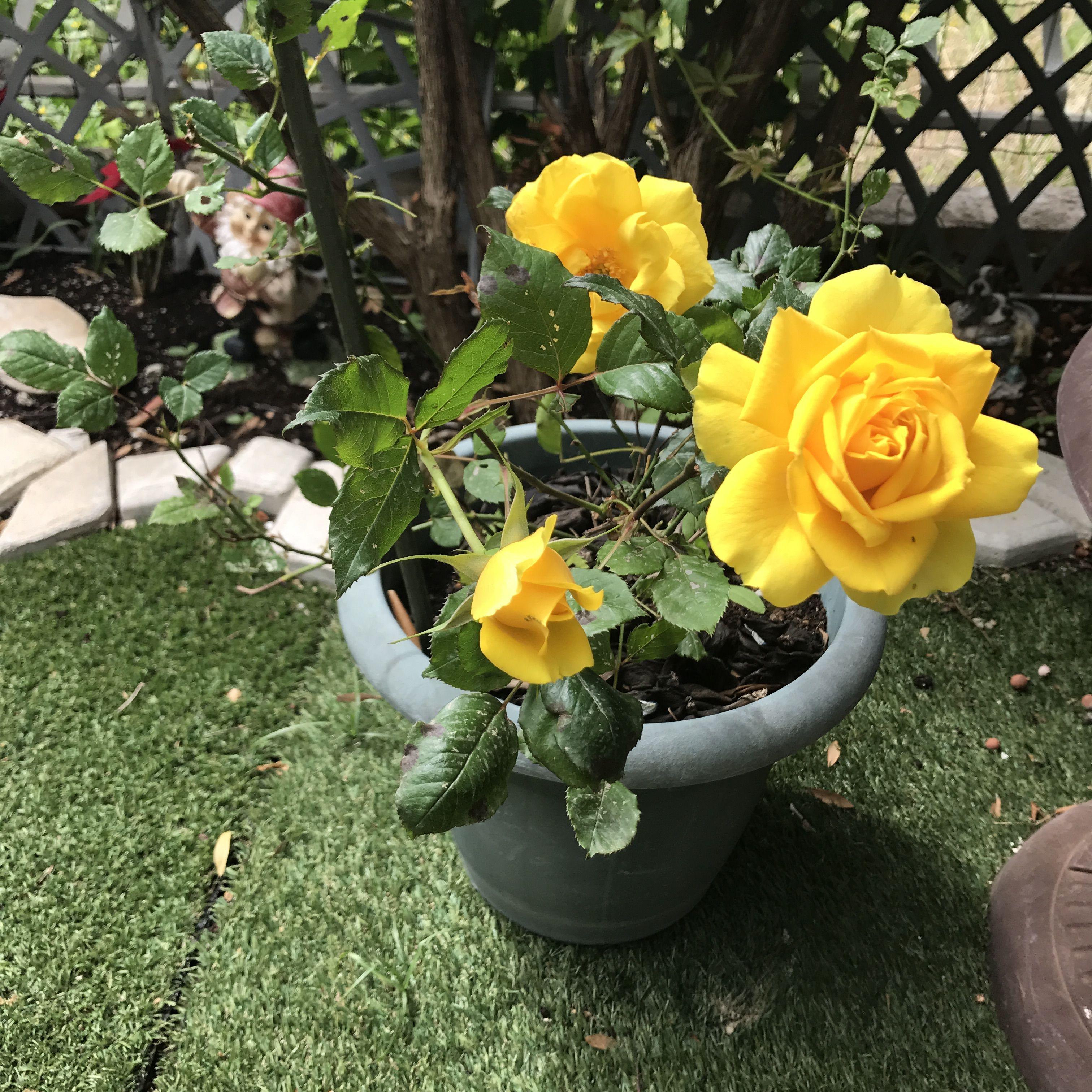 My Yellow Submarine Favorite Flowers Pinterest