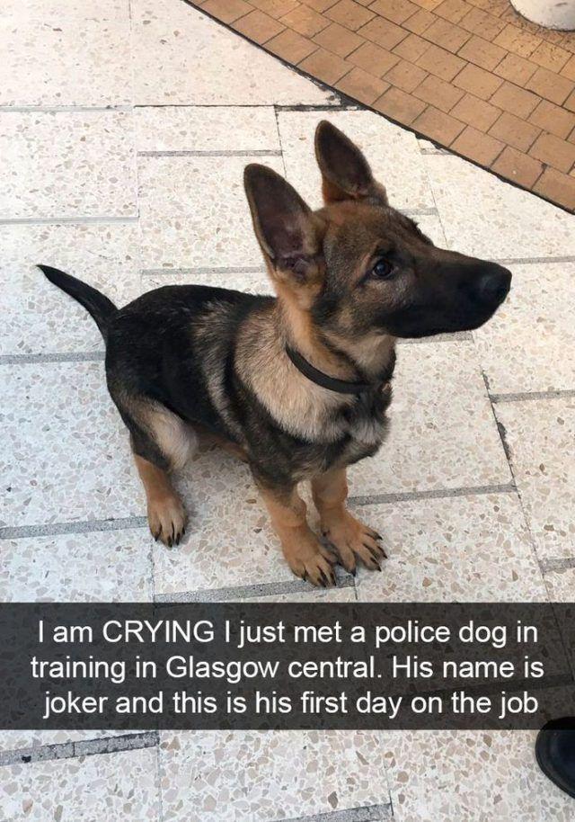 Funny Snapchats Dog Photo 190 Pics In 2020 Cute Baby Animals Cute Animals Funny Animals