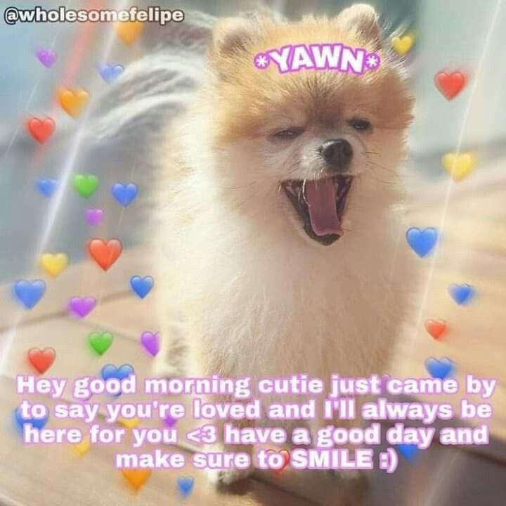 Pin By Amanda Walton On 3 In 2020 Funny Cute Memes Cute Memes Cute Love Memes