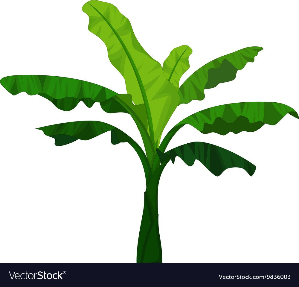 Design Of Hand Drawn Vector Map Of Banana Tree Banana Tree Clipart Leaf Grass Png And Vector With Transparent Background For Free Download How To Draw Hands Banana Leaves Watercolor Cartoon