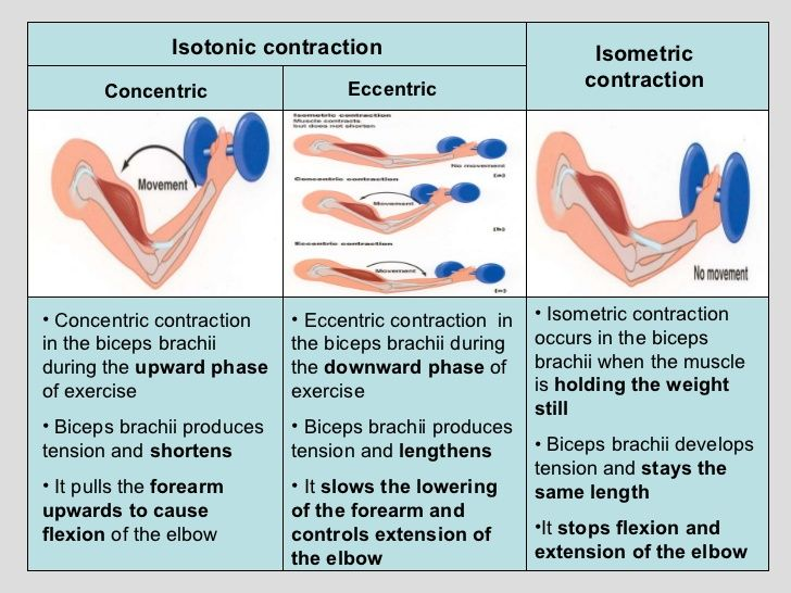 Differences between isometric and isotonic muscle contraction
