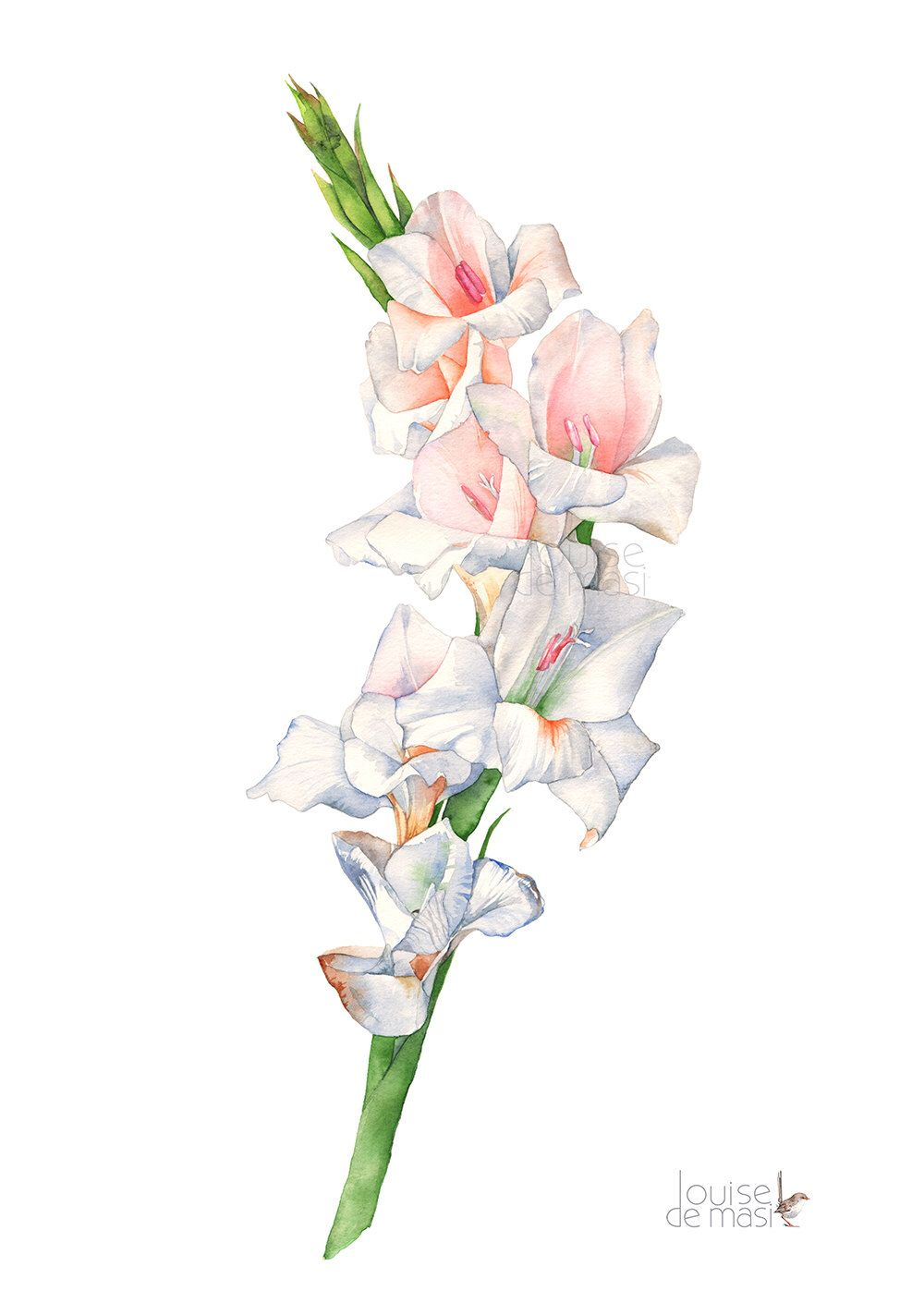 Gladiolus Watercolour Painting Print G17117 A3 Size Print Gladiolus Watercolor Painting Print Gladiolus Print Poppy Painting Flower Drawing Gladiolus Tattoo