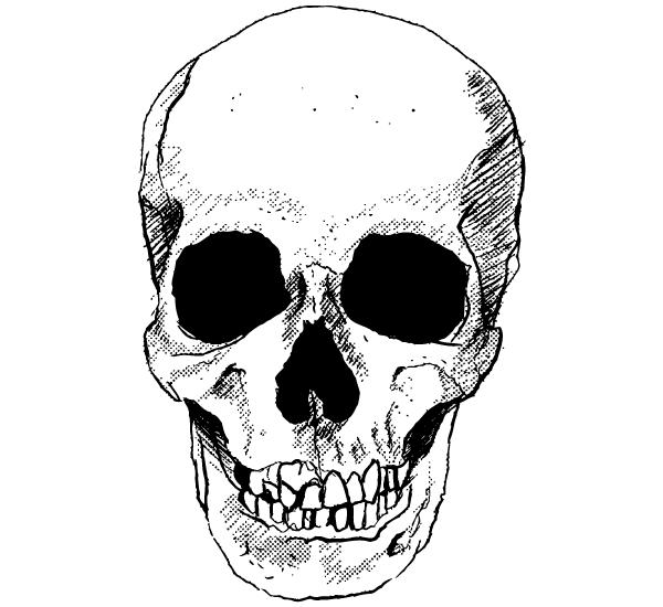Resultado de imagen para skull vector