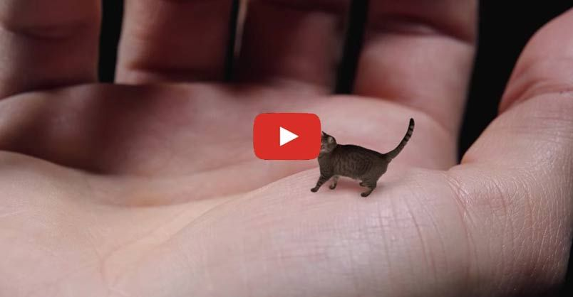 World S Smallest Cat Cute Tiny And Mean We Love Cats And Kittens Small Cat Best Cat Gifs Cat Gif