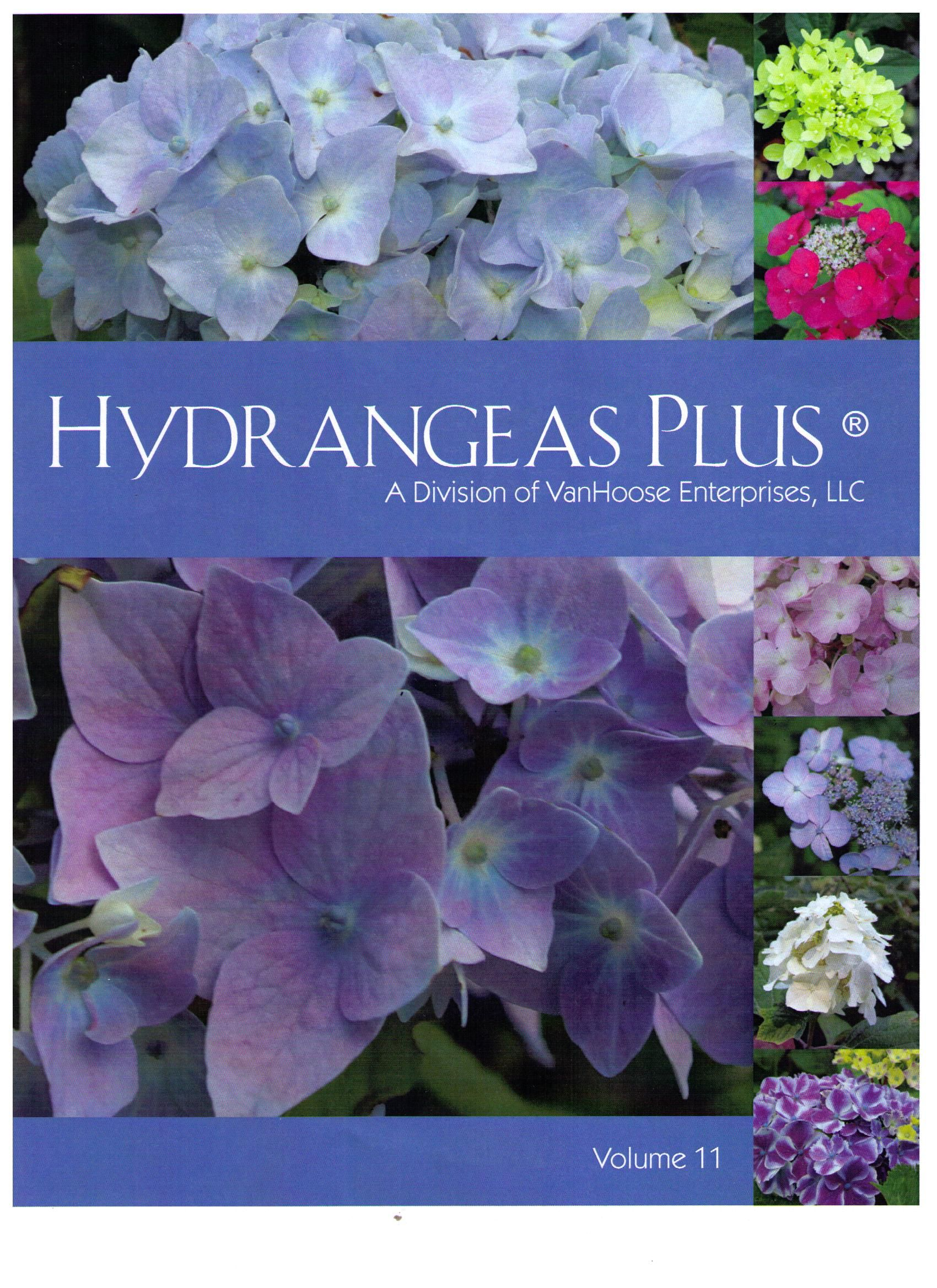 Hydrangeas Plus Catalog  Forty Pages Of Pictures, Hints And