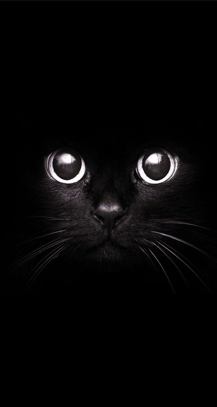Black Cat Dark Iphone Wallpaper Best Wallpaper Hd Black Cat Wallpaper Iphone Halloween Art Animal Wallpaper Iphone Wallpaper Hipster Cat Wallpaper