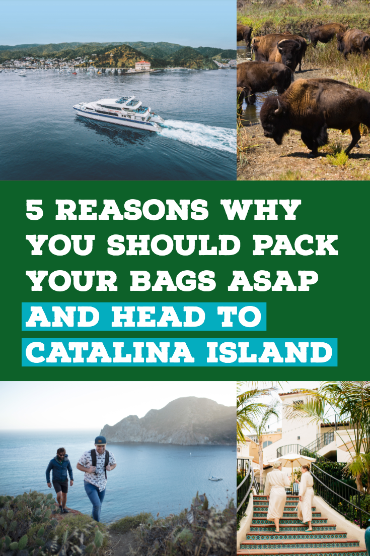 5 Reasons Why You Should Pack Your Bags Asap And Head To Catalina Island Catalina Island