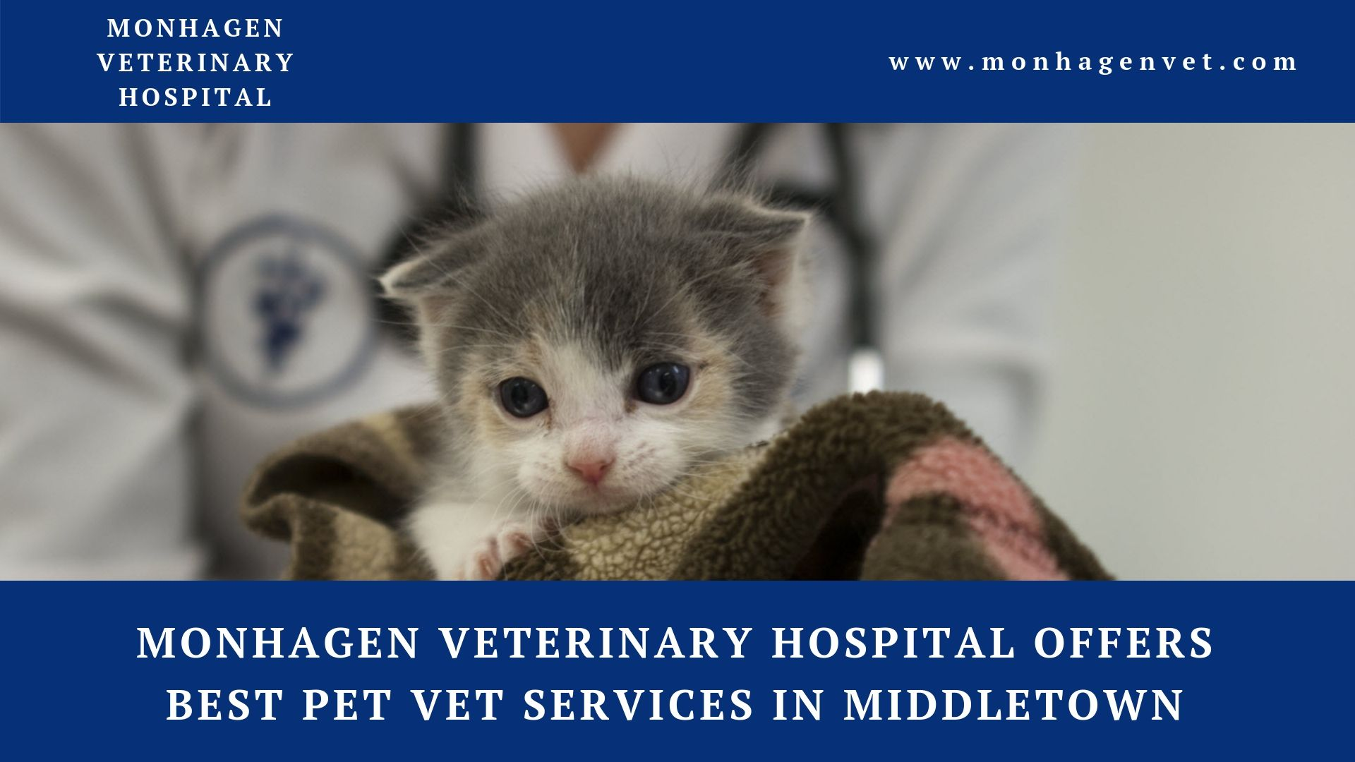 Find The Best Pet Vet Services In Middletown At Monhagen Veterinary Hospital The Highly Experienced Staff Provide The Compassionate Care With Images Pet Vet Dog Spay Pets