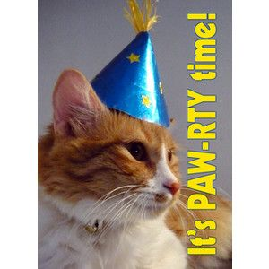 Cats In Party Hats