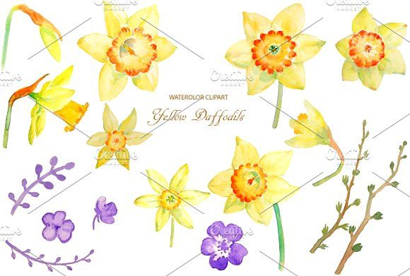 Spring Yellow Daffodil Png Clipart Flower Clipart Spring Flowers Daffodils