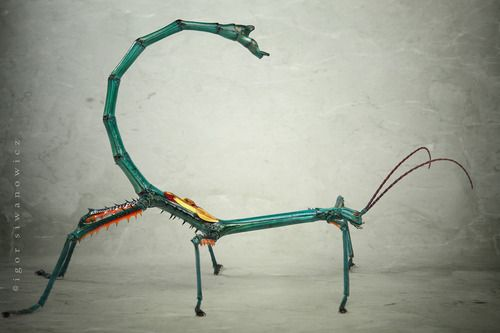 Giant Stick Insect Achrioptera Fallax By Igor Siwanowicz