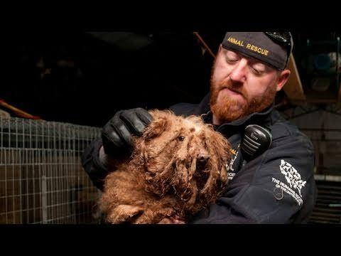 Tennessee Puppy Mill Shut Down Puppy mills, Animal