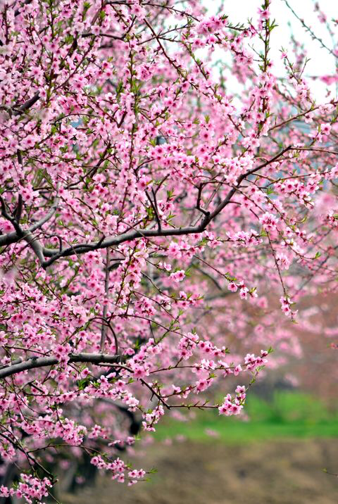 We Ve Rounded Up The Best Trees For Small Gardens Small Trees For Garden Redbud Tree Small Trees