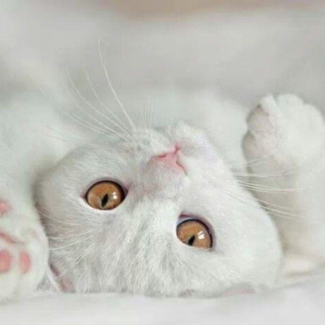 Love At First Sight Lustige Katzenbilder Katzenliebhaber Susseste Haustiere