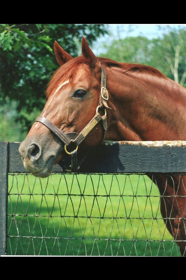 Secretariat, best race horse ever. won Belmont at 31 lengths and has the record in each leg of the Triple Crown, that still stands today