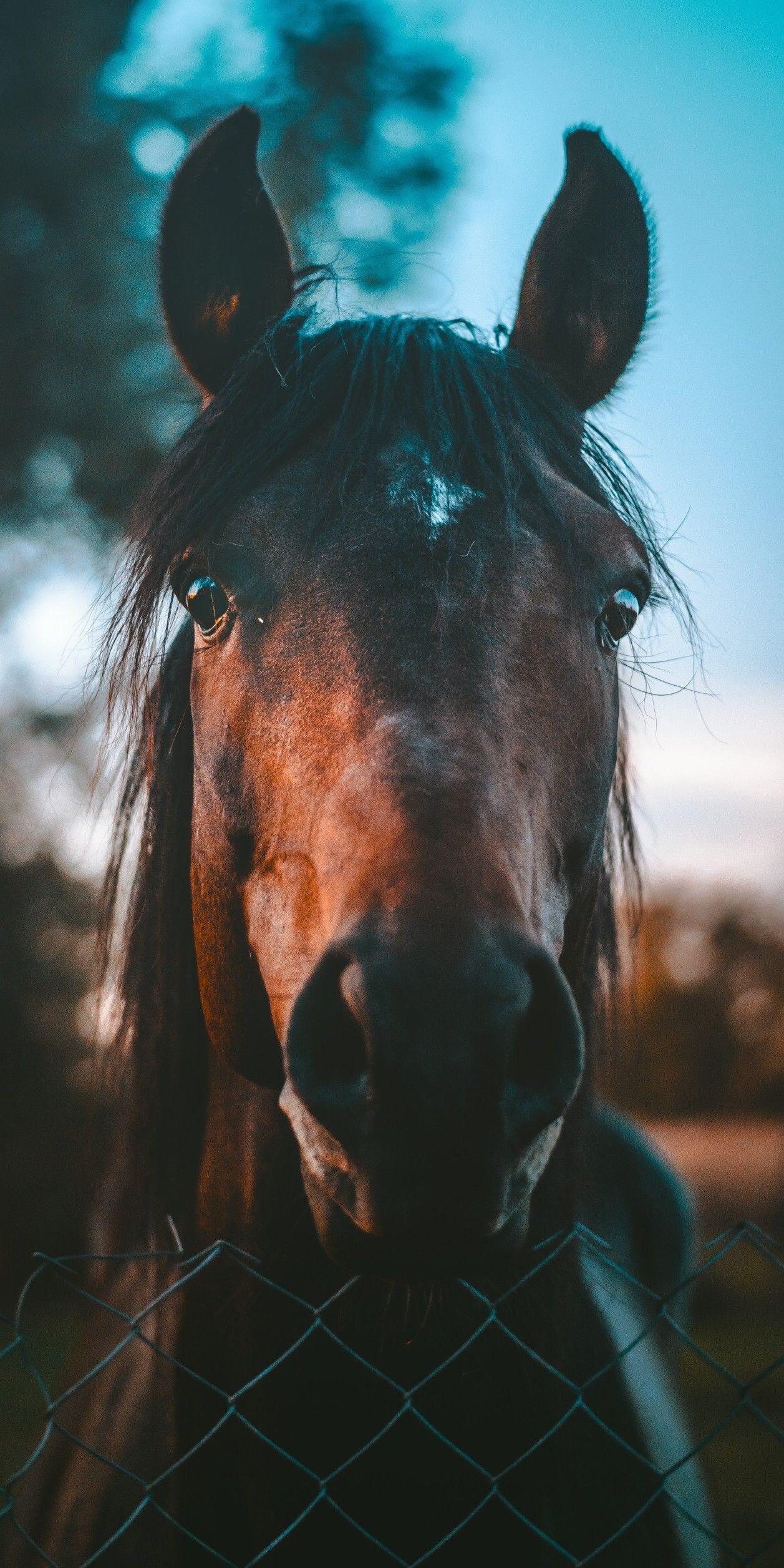 Cute Backgrounds Of Horses