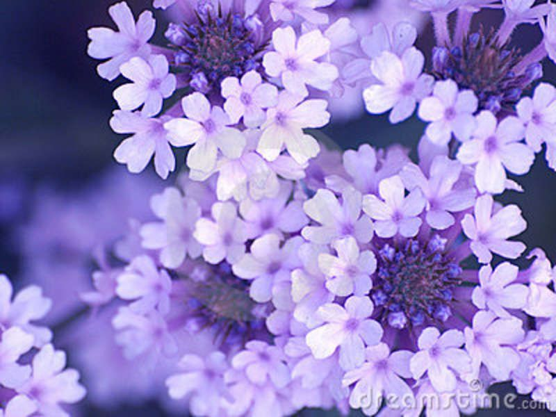 google bilder blumen blumen - google-suche | purple flowers and plants | flowers