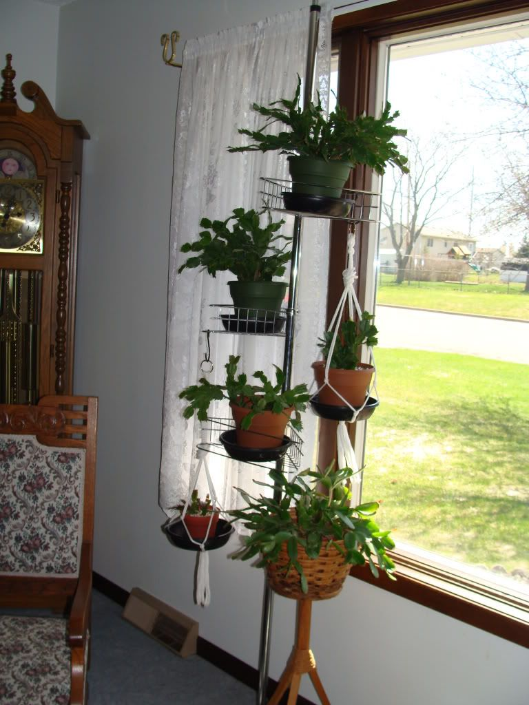 tension rod shower pole | Plant stand indoor, Hanging ... on Hanging Plant Stand Ideas  id=92115
