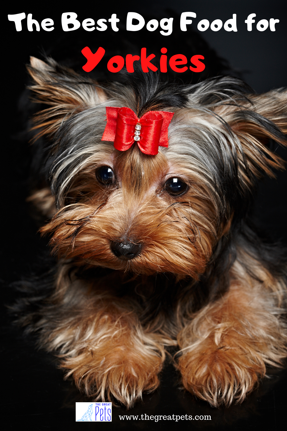 The Best Dog Food For Yorkies Review In Year The Great Pets In 2020 Best Dog Food Dog Food Recipes Dog Nutrition