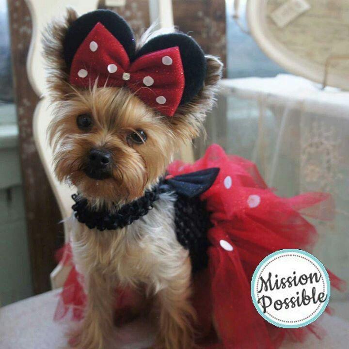 Minnie Mouse Yorkie Pet Halloween Costumes Halloween Animals
