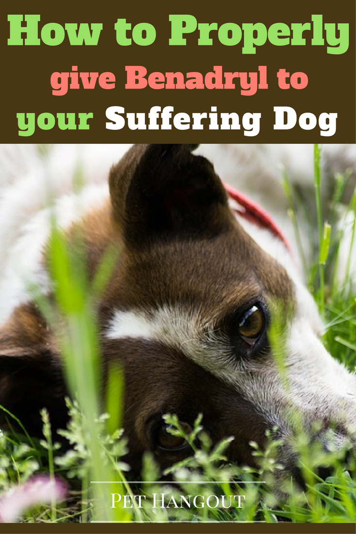 how to properly give benadryl to your suffering dog | dogs