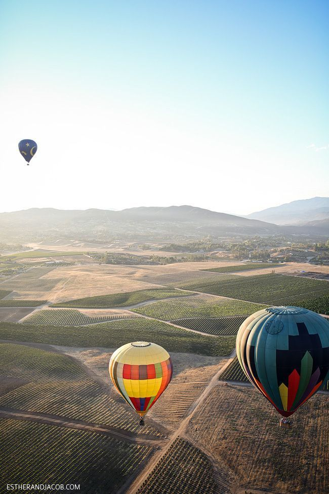 Hot Air Balloons Over The Vineyards In Temecula,California