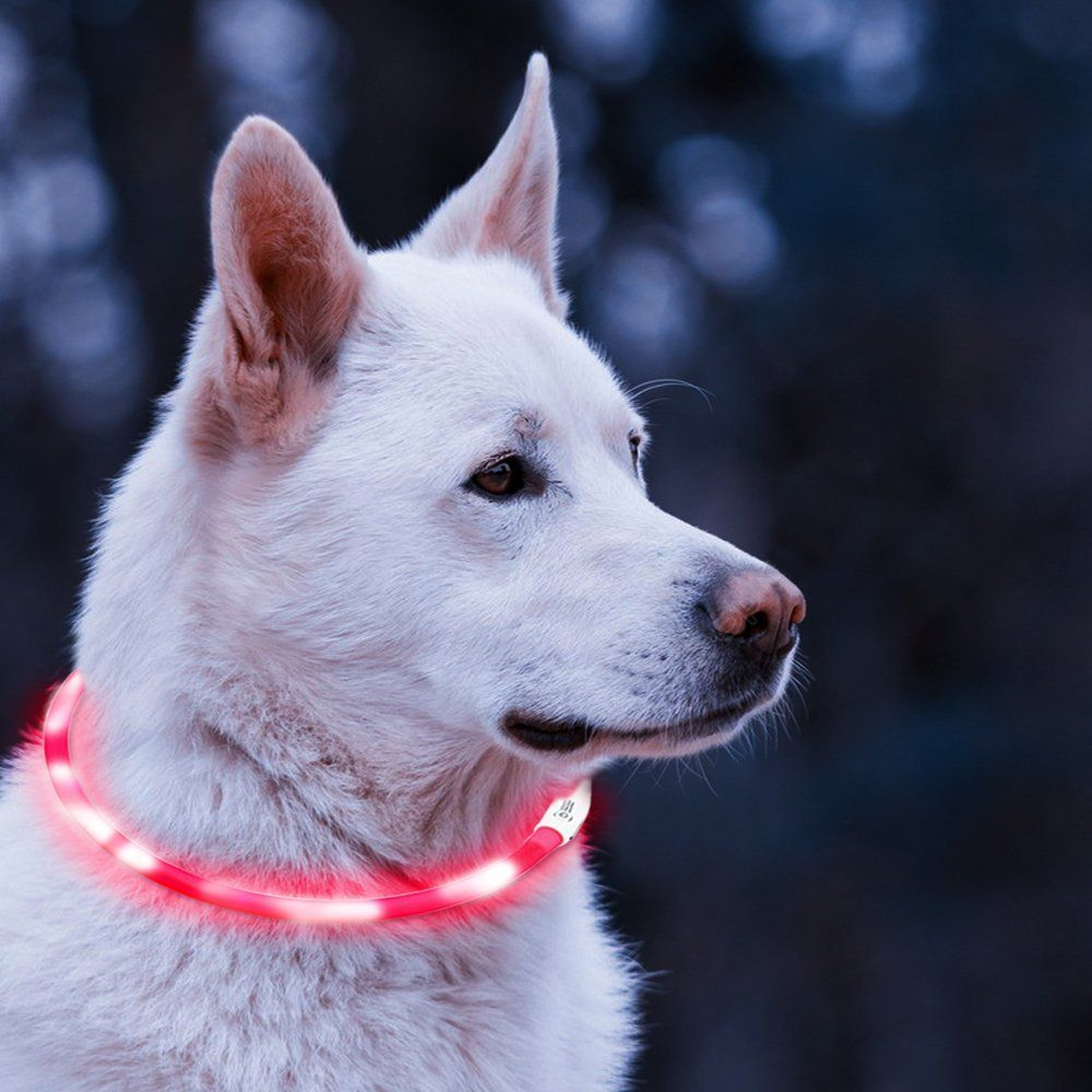 personalized reg rechargeable light collar led amazon up dog