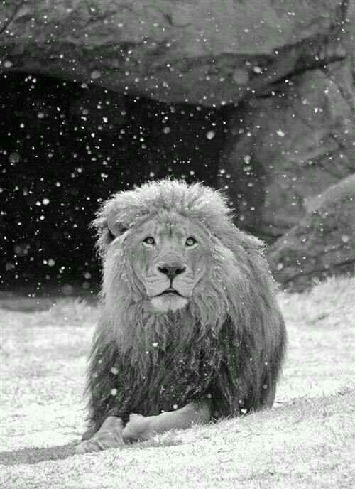 Leo's.