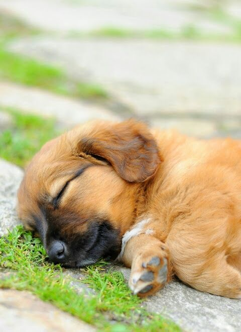 Small Little Puppy Sleeping To Chase His Dreams http://ift.tt/2sCvH5W