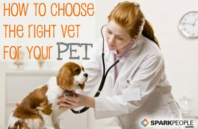 How To Choose The Best Veterinarian For Your Pet Sobaki Vladelcy Sobak Veterinariya