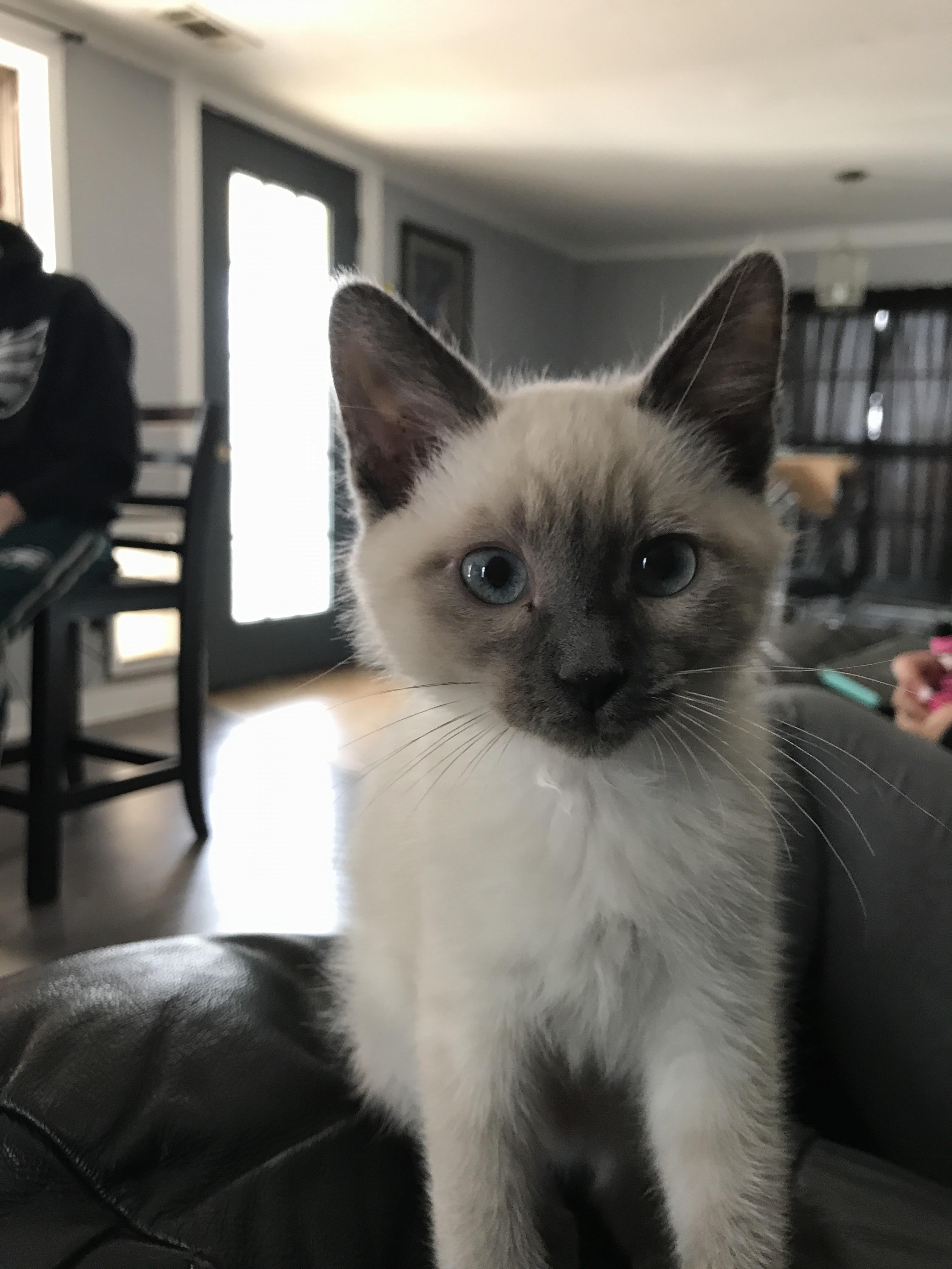 Friends got a kitten! http://ift.tt/2rpMiO3 | Cats&Bunnies ...