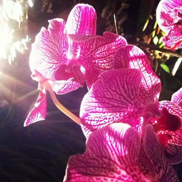 """@maxyam's photo: """" #gardens #by #the #bay #singapore #cloud #forest #orchid"""""""